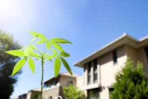 新築住宅と若葉