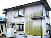 外壁カビ(3)