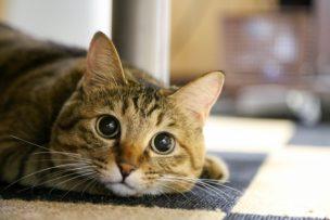 猫リフォーム