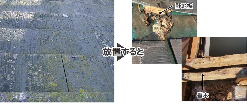 屋根藻やカビ