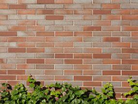 タイルの壁とツタ
