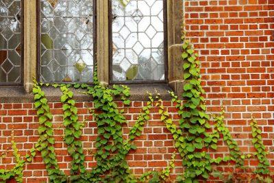 windows-217255_1280