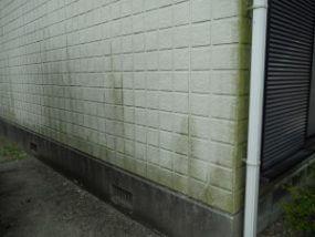 外壁/藻やカビの発生