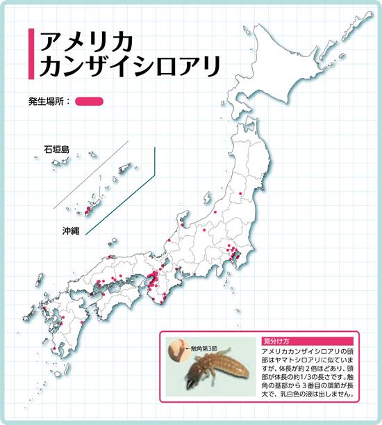 アメリカカンザイシロアリの分布図