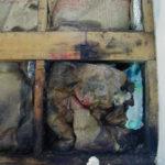 断熱材のカビ